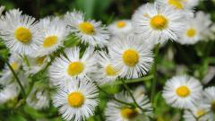 Wildflowers 37109