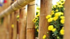 Wonderful Flowers Fence Wallpaper 44859