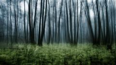 Woodland Fantasy Wallpaper 37119