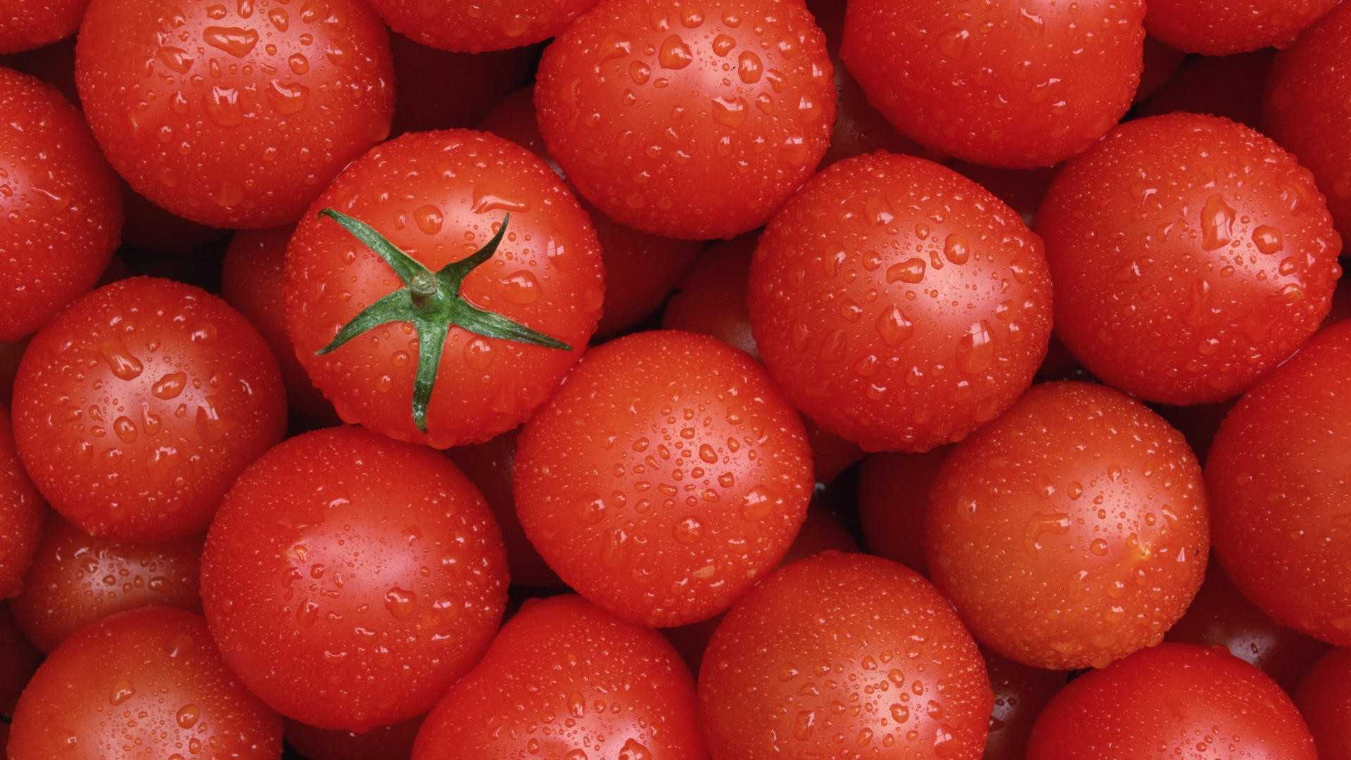 tomatoes wallpaper 44458