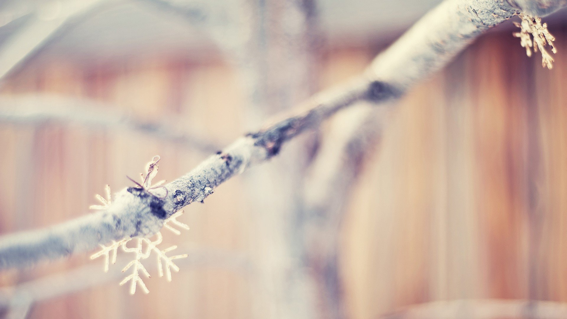 winter nature branches wallpaper 44901
