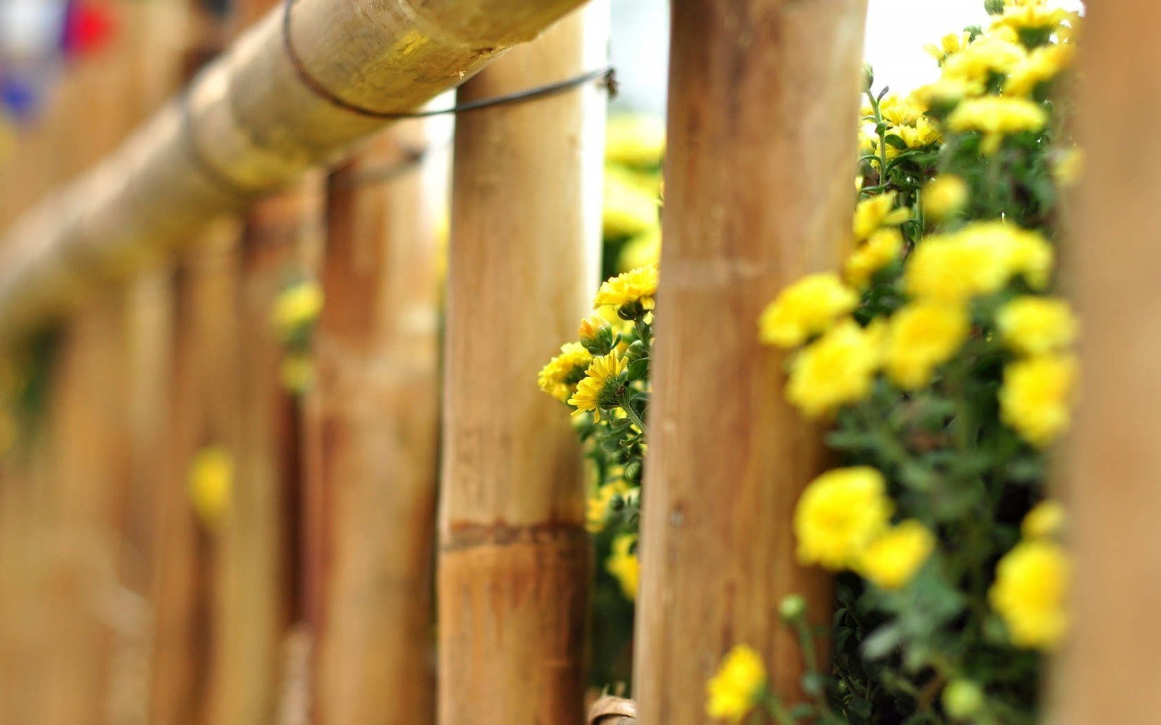 wonderful flowers fence wallpaper 44859