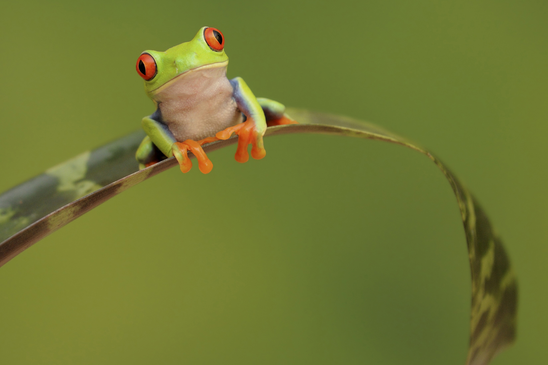 wonderful frog wallpaper 44317