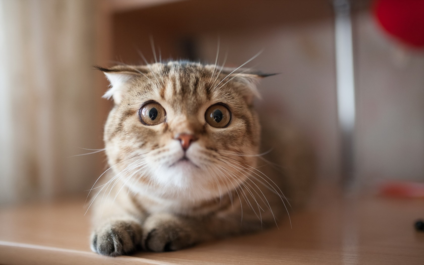 adorable cat look wallpaper 44164