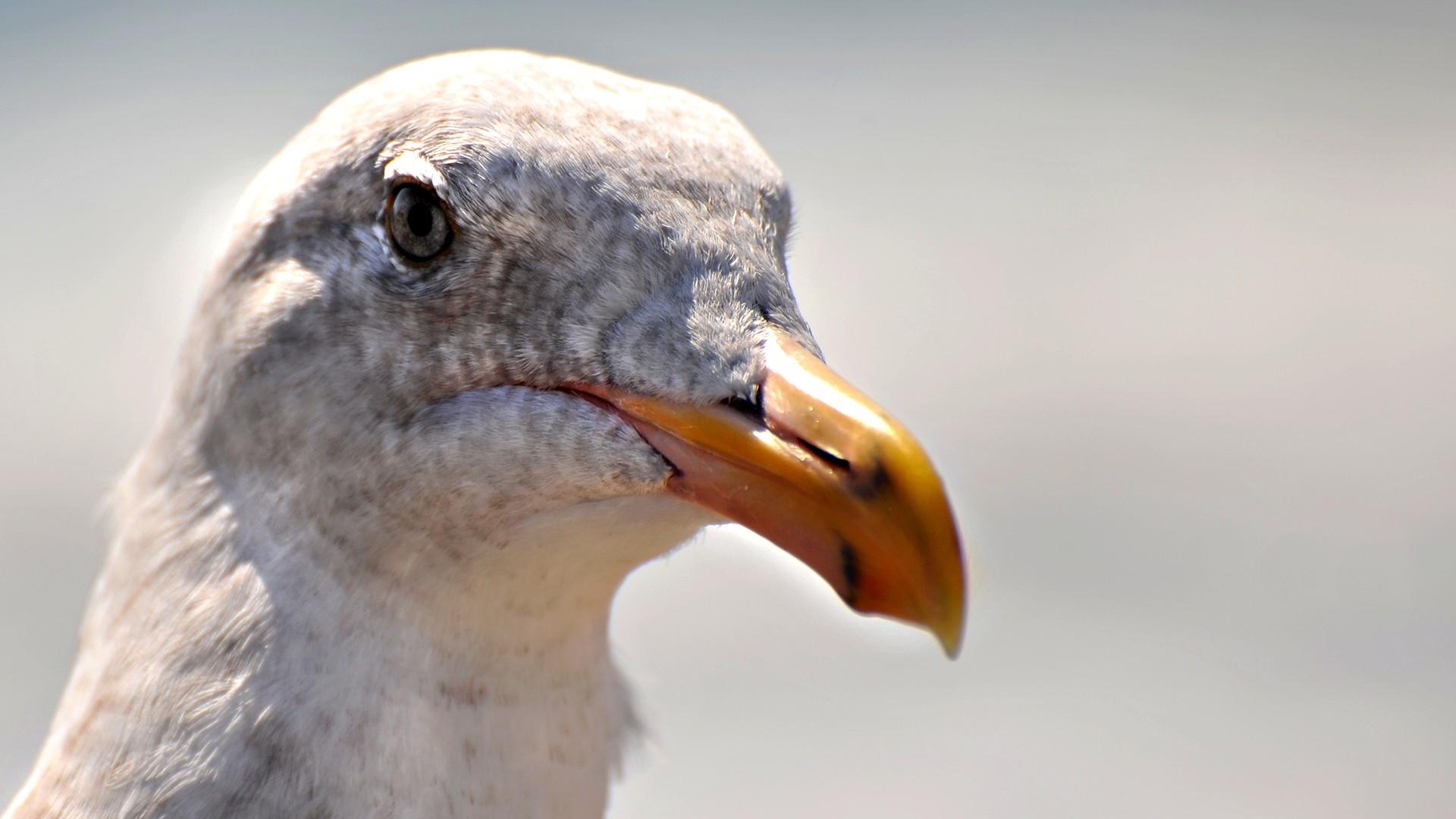 bird up close wallpaper hd 43148