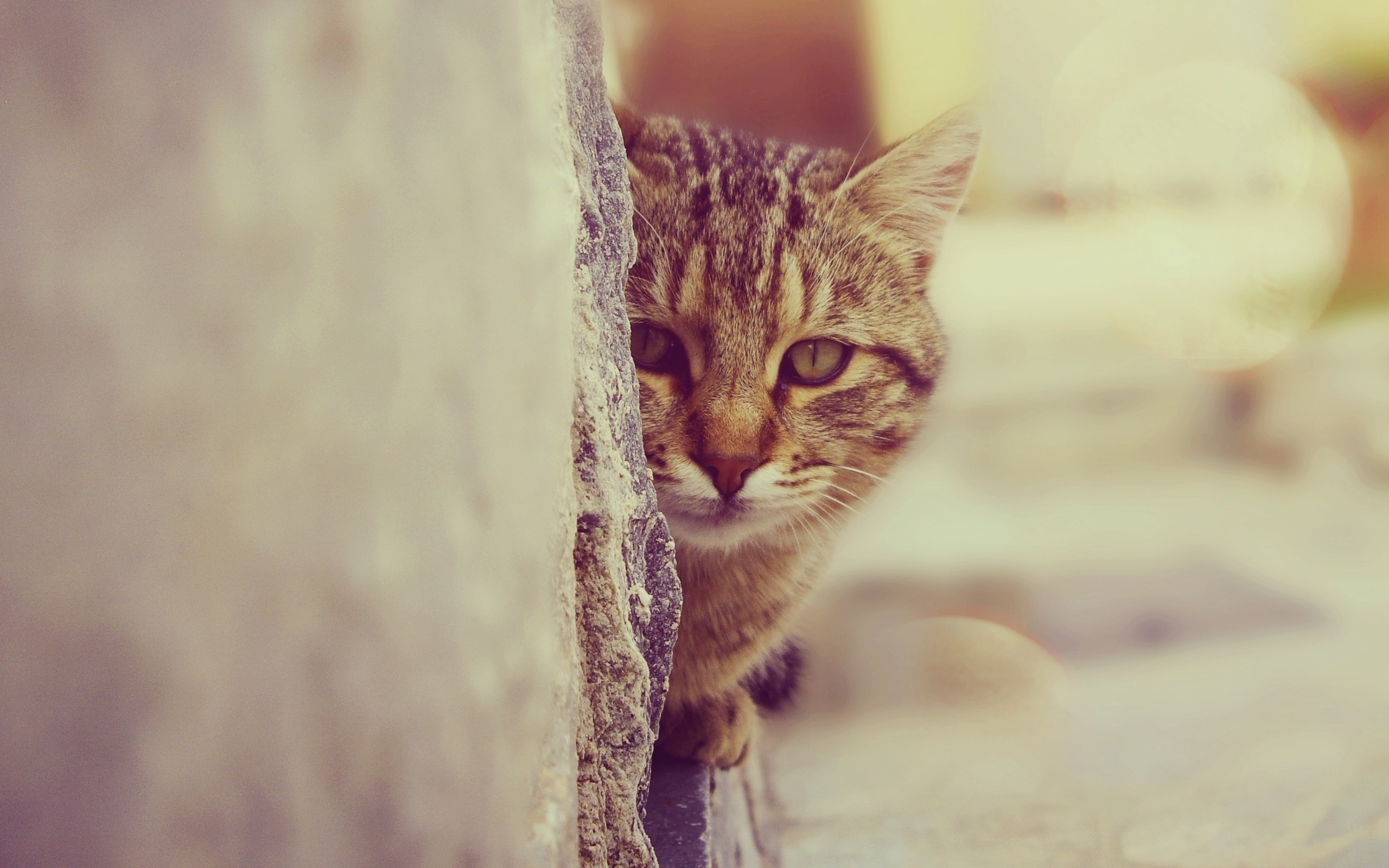 cat face look wallpaper 44158