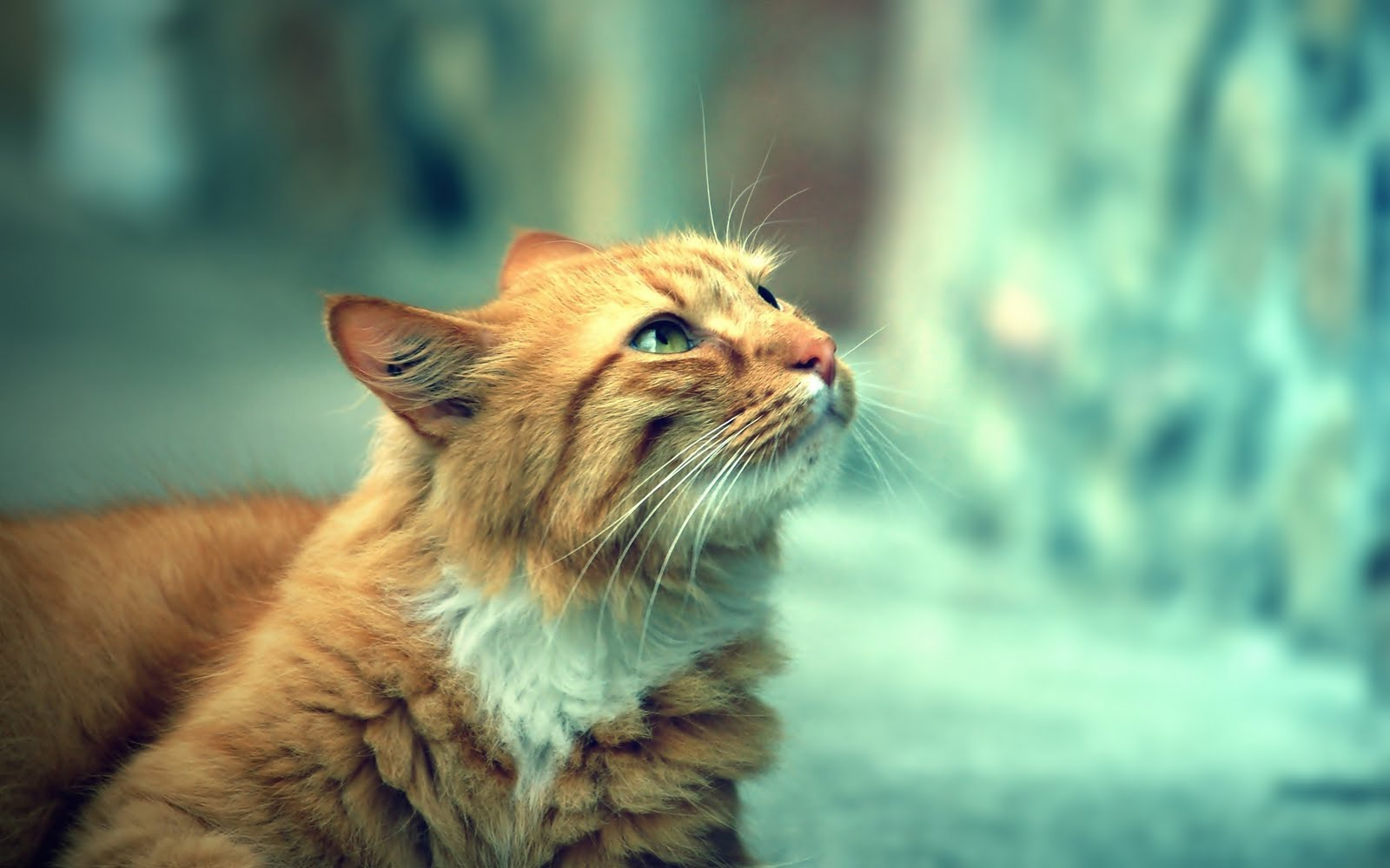 cat look wallpaper 44156