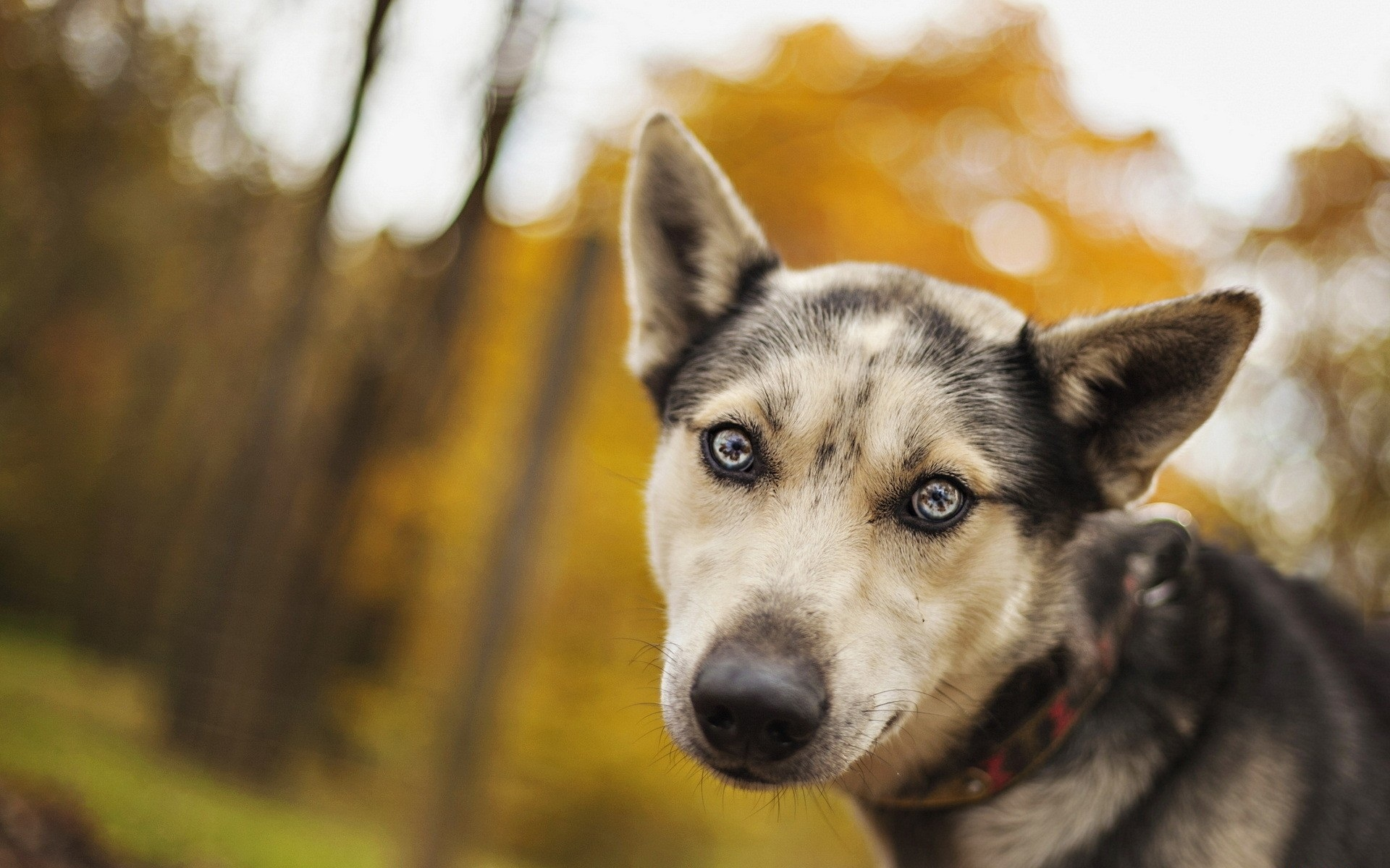 dog friend wallpapers 44572
