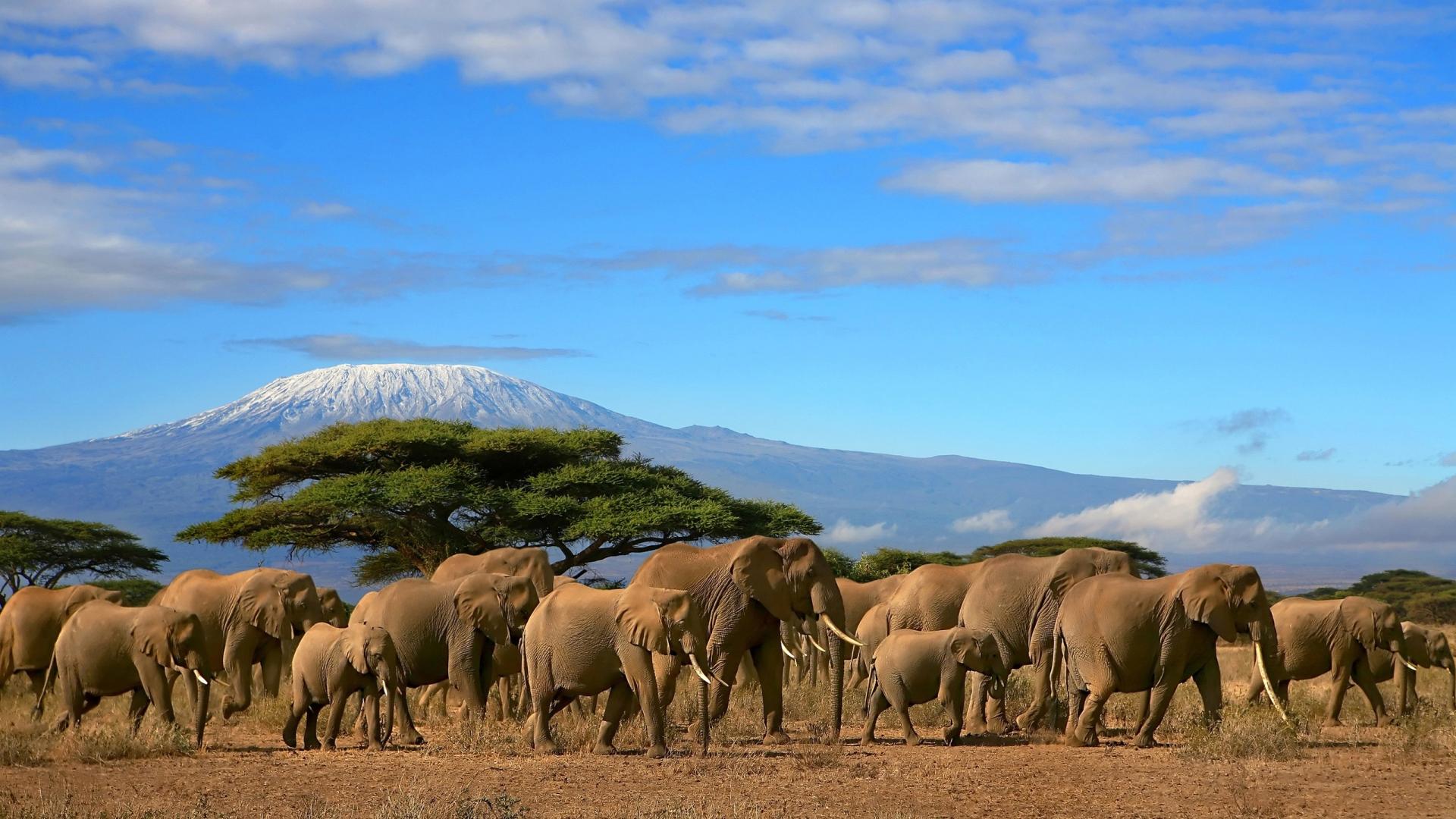 gorgeous herd wallpaper 42798