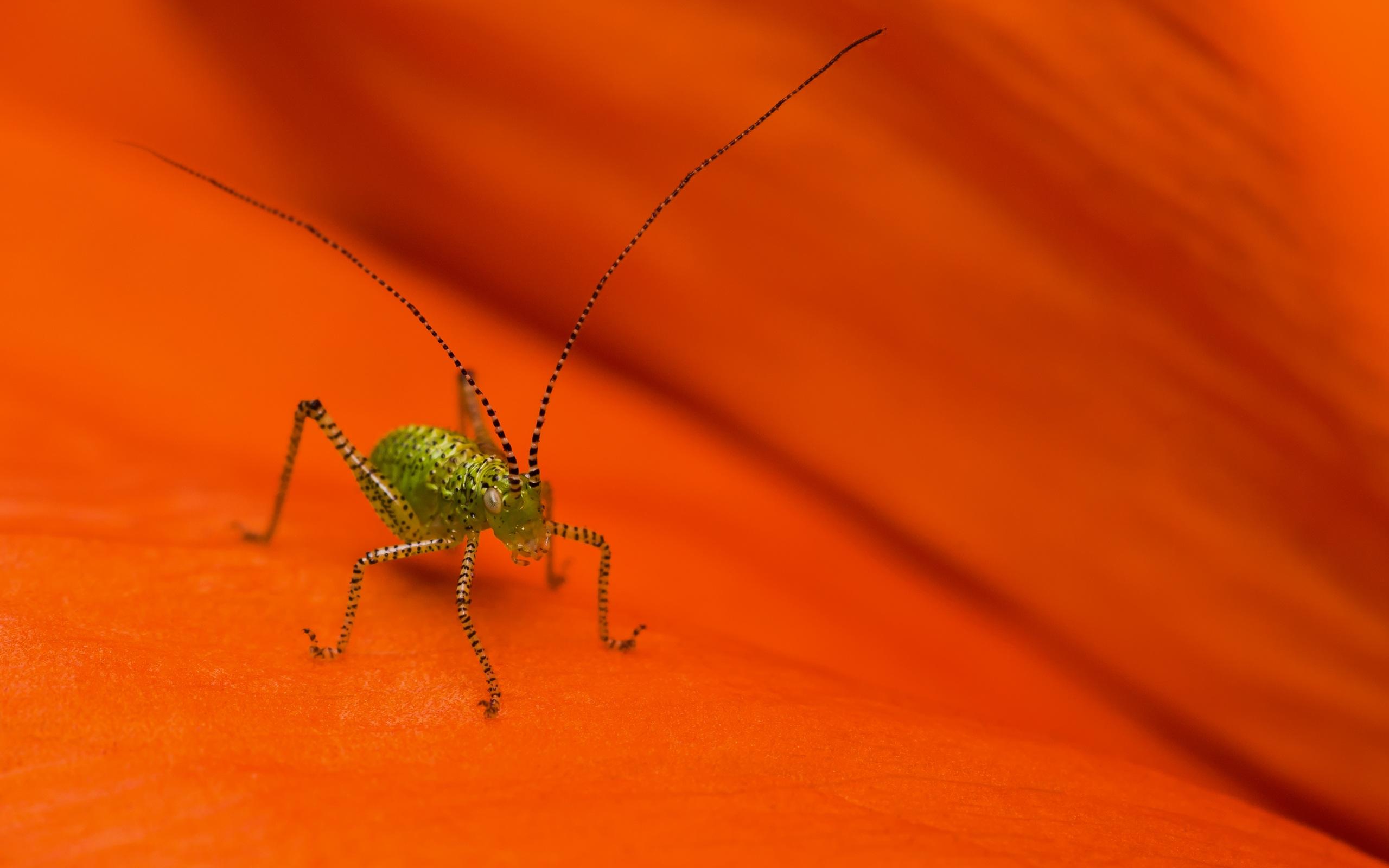 grasshopper close up wallpaper 44743