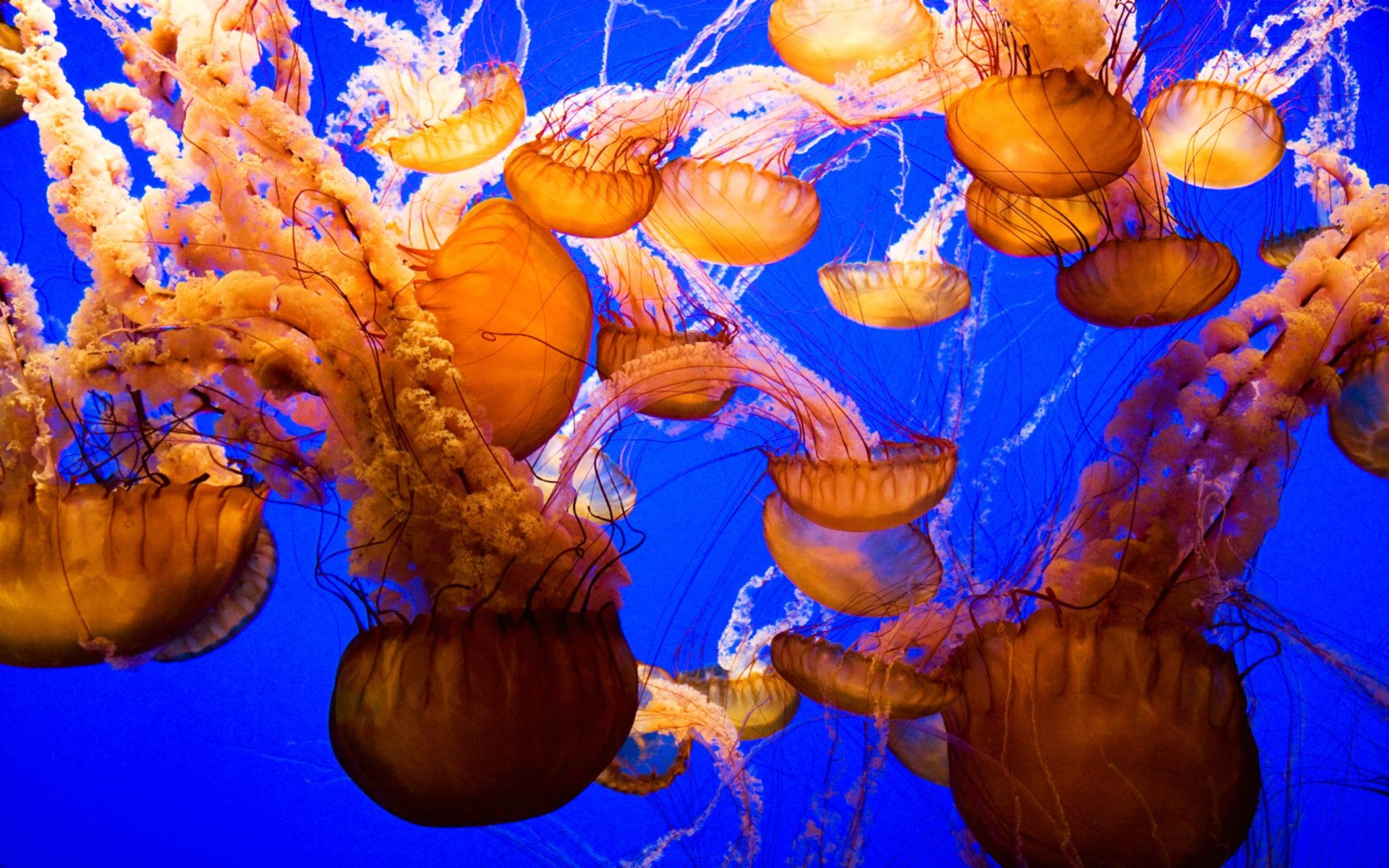 jellyfish wallpaper 4569