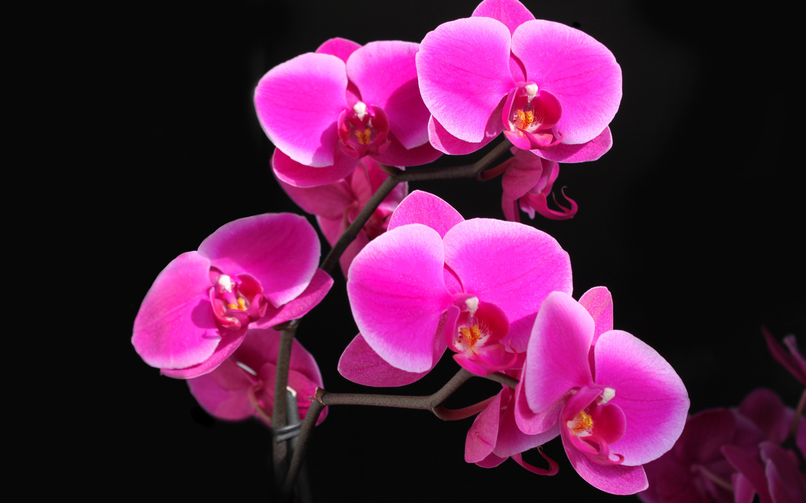 Pink Flowers Background 19328