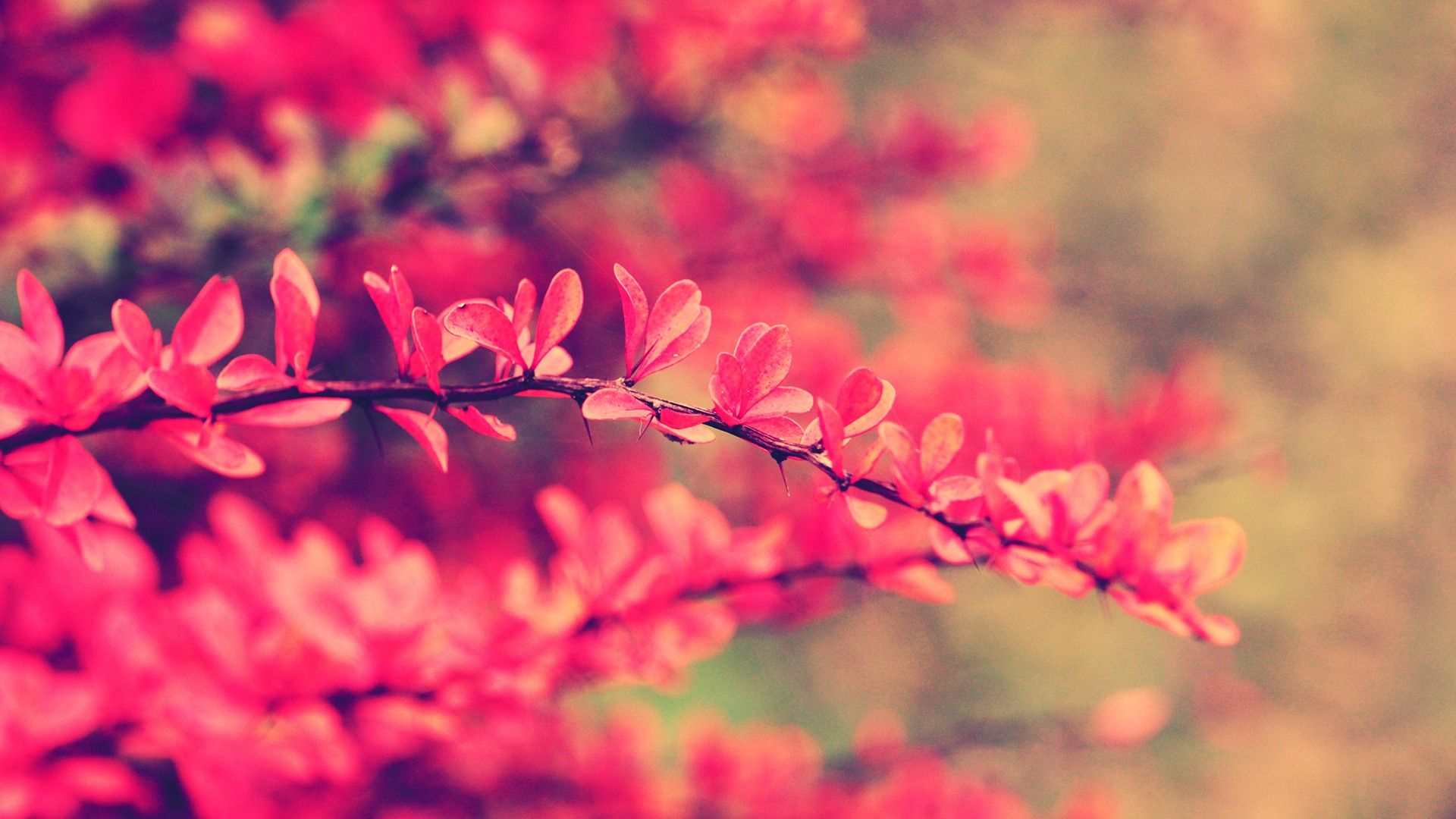 Pink flowers wallpaper 19327 1920x1080 px hdwallsource pink flowers wallpaper 19327 voltagebd Image collections