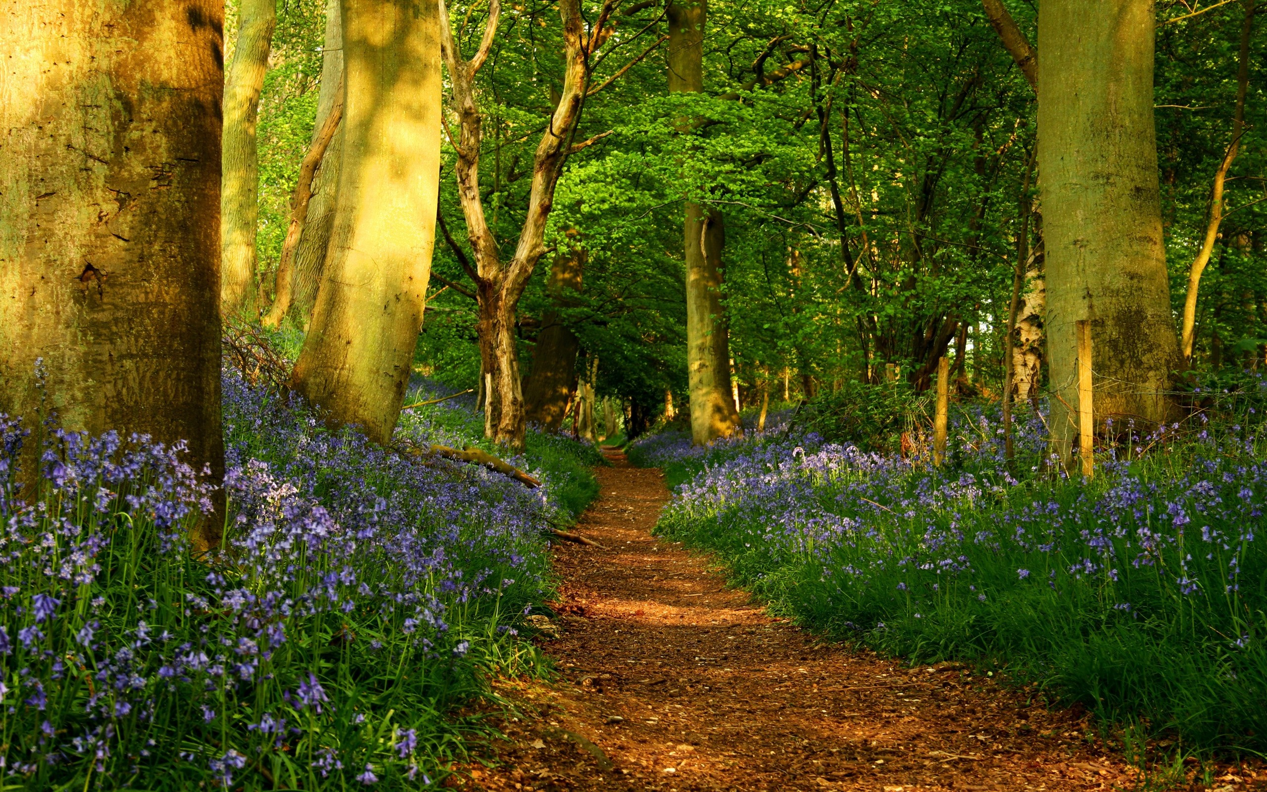download spring screensavers 21543 2560x1600 px high definition