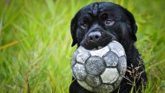 Adorable Dog Friend Wallpaper 44562