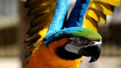 Amazing Bird Up Close Wallpaper 43153