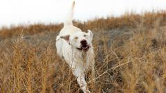 Awesome Dog Friend Wallpaper 44567