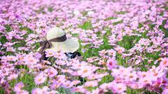 Beautiful Flower Field Wallpaper 42770