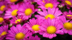 Beautiful Pink Flowers 19329