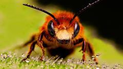 Bee 26602