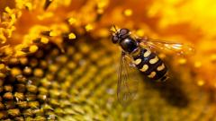 Bee 26603