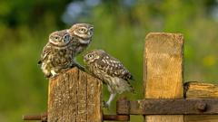 Bird Owls Fence Wallpaper 44180