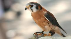 Bird Up Close Wallpapers 43154