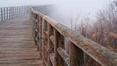 Bridge Railing Wallpaper 43791