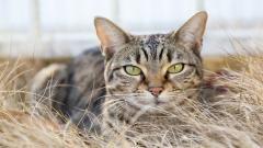 Cat Look Dry Grass Wallpaper 44166