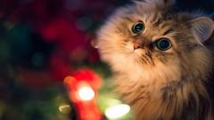 Cat Look Lights Wallpaper 44161