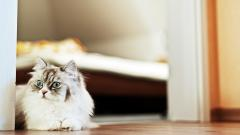 Cat Look Wallpaper 44159