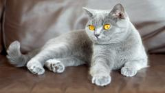 Cat Look Yellow Eyes Wallpaper 44162