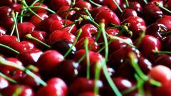 Cherry Wallpaper 20667