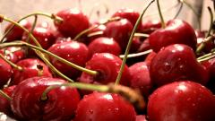 Cherry Wallpaper 20671