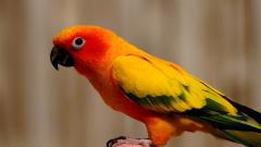 Colorful Bird Up Close Wallpaper 43149