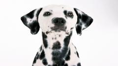 Cute Dog Wallpaper 39755