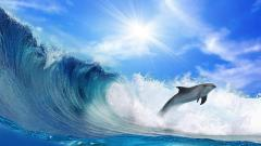 Dolphin Wallpaper 4555