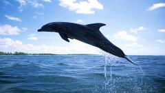 Dolphin Wallpaper 4556