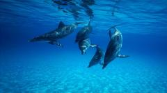 Dolphin Wallpaper 4559
