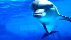 Dolphin Wallpaper 4560