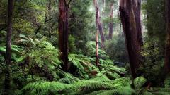 Fantastic Jungle Wallpaper 41672
