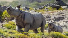 Fantastic Rhinoceros Wallpaper 43102