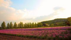 Flower Field Wallpaper 42766