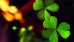 Free Green Macro Wallpaper 37269