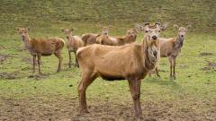Free Herd Wallpaper 42794