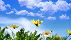Free Spring Screensavers 21559