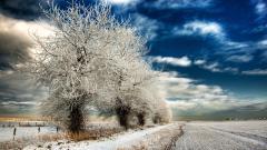 Frosty 36024