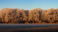 Frosty Background 36010