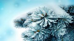 Frosty Wallpaper 35998