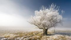 Frosty Wallpaper 36001